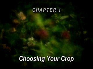 AFTER >: Haymaking 101 # 01 - Choosing Your Crop
